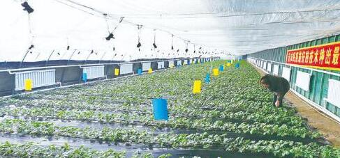 """""""Science and Technology Show"""" was staged in the greenhouse of Kuntai Modern Agriculture In"""